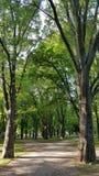 Ein Baum von Bäumen Lizenzfreie Stockfotos