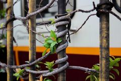 Ein Baumast eingewickelt um eine Metallstange, eines Tors, nahe der Vatikanstadt, Rom Italien Stockfotografie