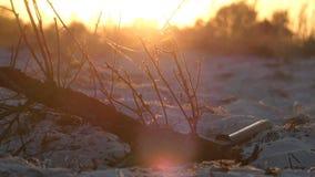 Ein Baumast und eine Axt, die in der Nähe bei einem herrlichen Sonnenuntergang liegen stock video footage