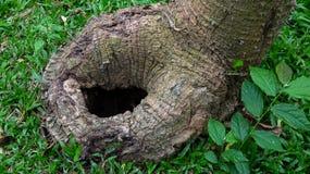 Ein Baumloch auf dem Gras stockfotos