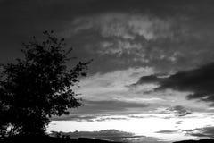 Ein Baumschattenbild und schönen Wolken bei dem Sonnenuntergang, abstrakte Formen machend Stockfoto
