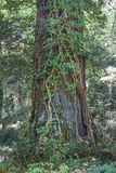 Ein Baumstamm in der Natur Stockfoto