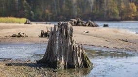 Ein Baumstumpf auf dem Ufer von einem See Stockfotos