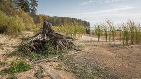 Ein Baumstumpf auf dem Ufer von einem See Lizenzfreies Stockfoto