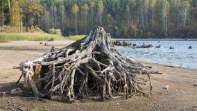 Ein Baumstumpf auf dem Ufer von einem See stockfotografie