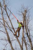 Ein Baumtrimmer Lizenzfreie Stockfotografie