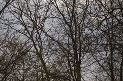 Ein Baumwald und -sonne stockbilder