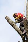 Ein Baumzüchter, der einen Baum schneidet Stockbild