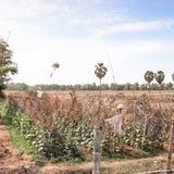 Ein bebautes Feld Stockfoto