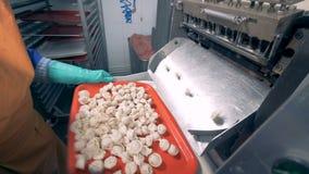 Ein Behälter erhält füllte mit Fleischmehlklößen und dann wird er in ein Fach gesetzt stock video footage
