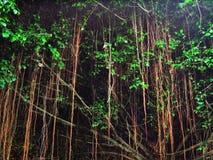 Ein beleuchteter Baum bis zum Nacht Stockfotografie