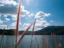 Ein bequemes mein freier Tag mit Grasblumen-Sonnenscheinhintergrund m lizenzfreie stockfotografie