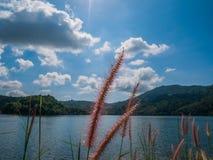 Ein bequemes mein freier Tag mit Grasblumen-Sonnenscheinhintergrund m lizenzfreie stockbilder