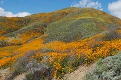 Ein Berg von Mohnblumen stockfoto
