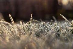 Ein Beruhigen und ein reizend Morgen auf dem Garten Ein Gras ist bedeckter Reif und die Sonne, die beautifly gelbes Licht sendet lizenzfreie stockbilder