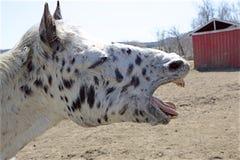 Ein beschmutztes Pferd mit Haltung Lizenzfreies Stockbild