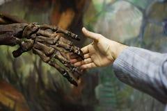 Ein Besuch zum natürlichen Museum: Handerschütterung im Laufe der Zeit Lizenzfreies Stockfoto