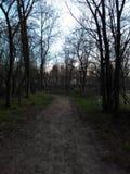Ein bewaldeter Weg Stockbilder