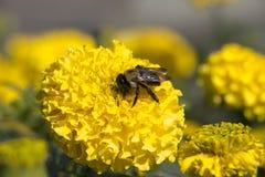 Ein Biene ` s Tagewerk Stockfotos