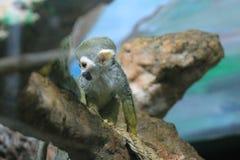 Ein Bild eines neugierigen kleinen Affen stockfotografie