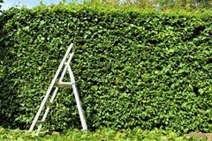 Ein Bild von Zutaten einer Hecke, arbeitend im Garten stockfoto