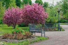 Ein blühender Garten mit Bänke und Laternen Stockbild