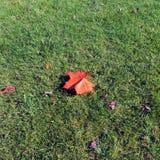 Ein Blatt auf dem Gras im Herbst Stockfotografie