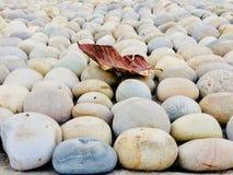 Ein Blatt auf Stein Stockfotografie
