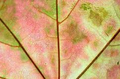 Ein Blatt eines Baums im Herbst im Makro auf einem Oberlicht Lizenzfreie Stockfotografie