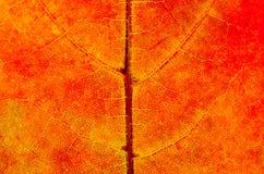 Ein Blatt eines Baums im Herbst im Makro auf einem Oberlicht Lizenzfreie Stockfotos
