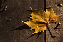 Ein Blatt im Herbst im Holz Stockbild