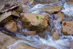 Ein Blatt am kleinen Wasserfall Lizenzfreies Stockfoto