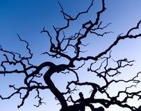 Ein blattloser Baum im Winter Lizenzfreie Stockfotos