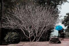 Ein blattloser Baum und ein blauer Regenschirm Stockbilder