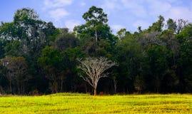 Ein blattloser Baum unter großem grünem Baum Stockfotos