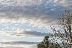 Ein blauer Himmel mit dunklen Wolken und Bäumen Stockfotos