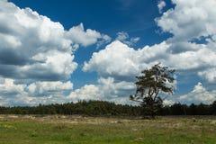 Ein blauer Himmel mit scharfen weißen Wolken Stockfotos