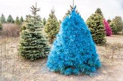 Ein blauer Weihnachtsbaum Stockfoto