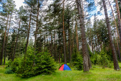 Ein blaues und rotes Zelt im Wald Stockbild