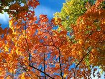 Ein Blick auf den Himmel im Herbstwald Stockbild