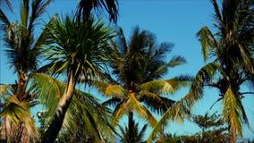 Ein Blick auf die Palme an der Dämmerung stock video
