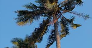 Ein Blick auf die Palme an der Dämmerung stock footage