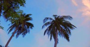 Ein Blick auf die Palme an der D?mmerung stock video footage