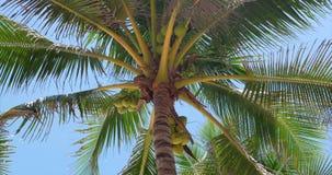Ein Blick auf die Palme an der D?mmerung stock video