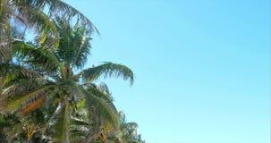 Ein Blick auf die Palme an der D?mmerung stock footage