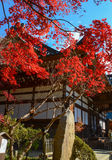Ein Blick des Herbstes stockbild