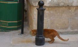 Ein Blick einer Straßenkatze Stockfoto