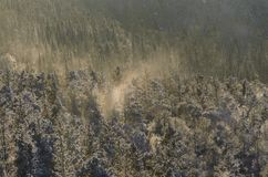 Ein Blizzard im Winterwald mit einem schönen Abendlicht Lizenzfreies Stockfoto