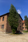 Ein Block und ein Baum in Lager Auschwitz I Lizenzfreies Stockfoto