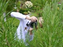 Ein blonder Junge mit einem weißen Hemd versucht, eine Kreuzspinne in einem Rosmarinstrauch im Garten zu fotografieren Stockfoto